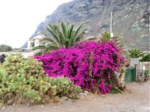 blume, berg, pflanze, landschaft, teneriffa